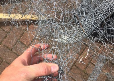solar panel bird wire Glasgow